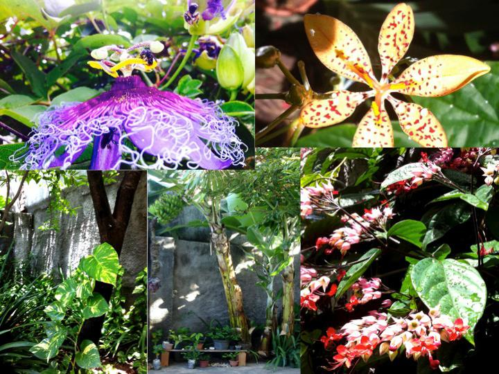 flowers and backyard views