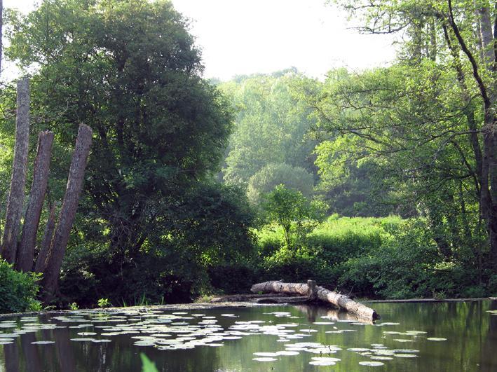 Nearby Fishing Lake