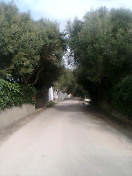 Calle- camino playa