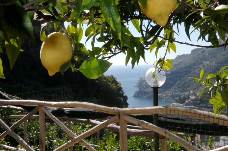 Lemon and Amalfi coast vies