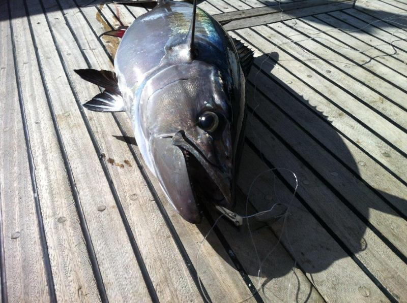 best fishing at red sea you can catch