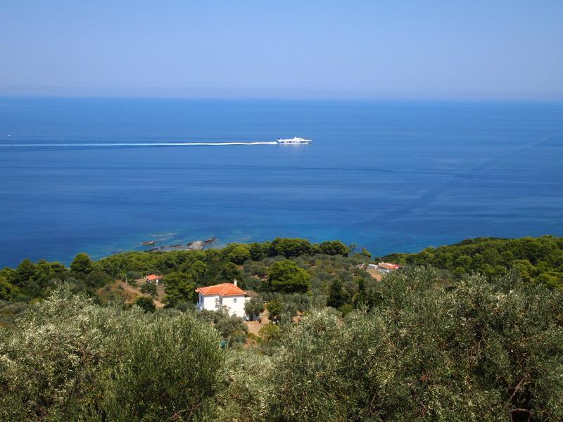 the villa set in olive groves near the sea