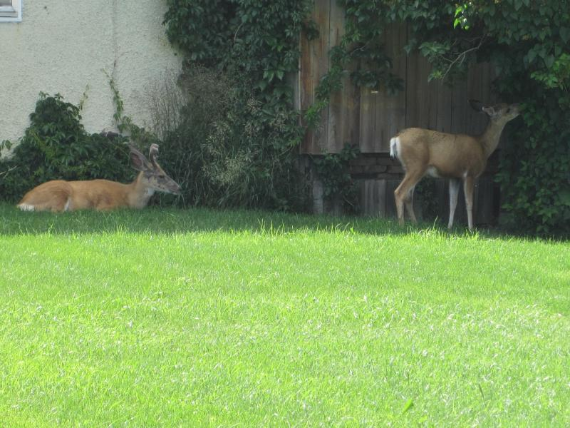 Daily Backyard Guests_2