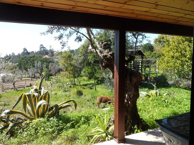 Garden view from rear verandah