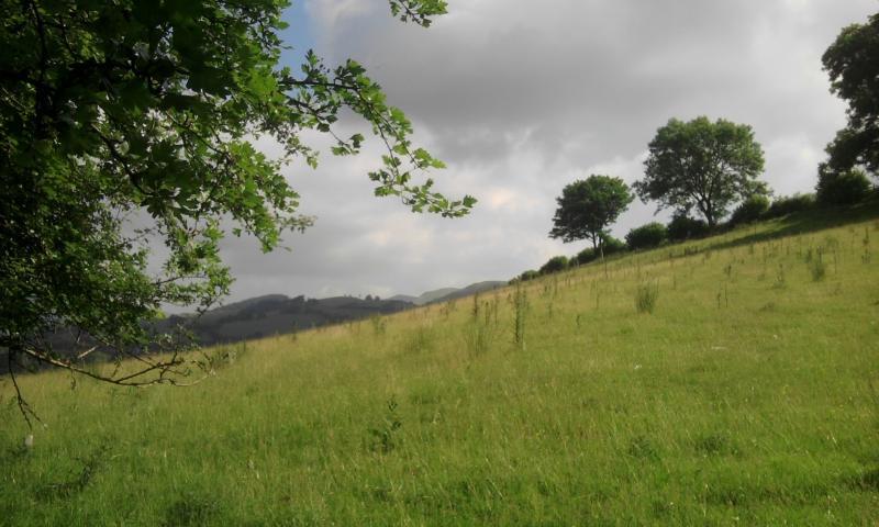 The fields around the garden