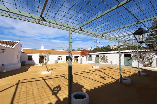 Albero courtyard