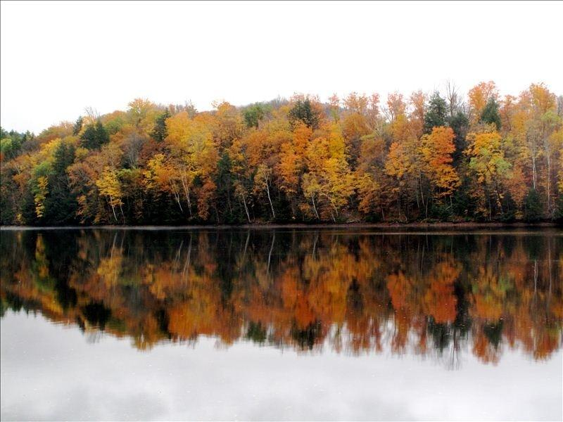 View across the river during fall foliage season.