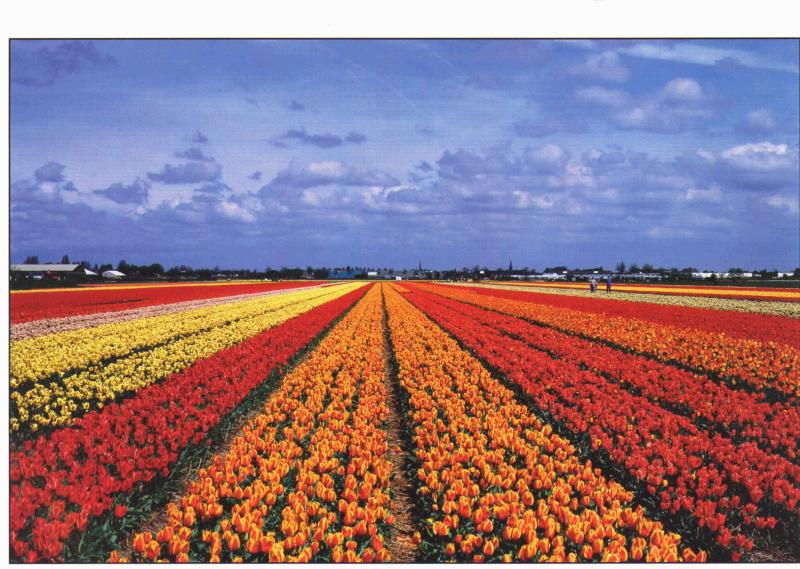 Bulb fields in the spring