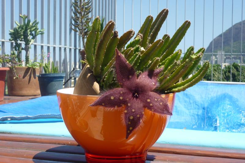 beautful cactus close to the little swiming pool