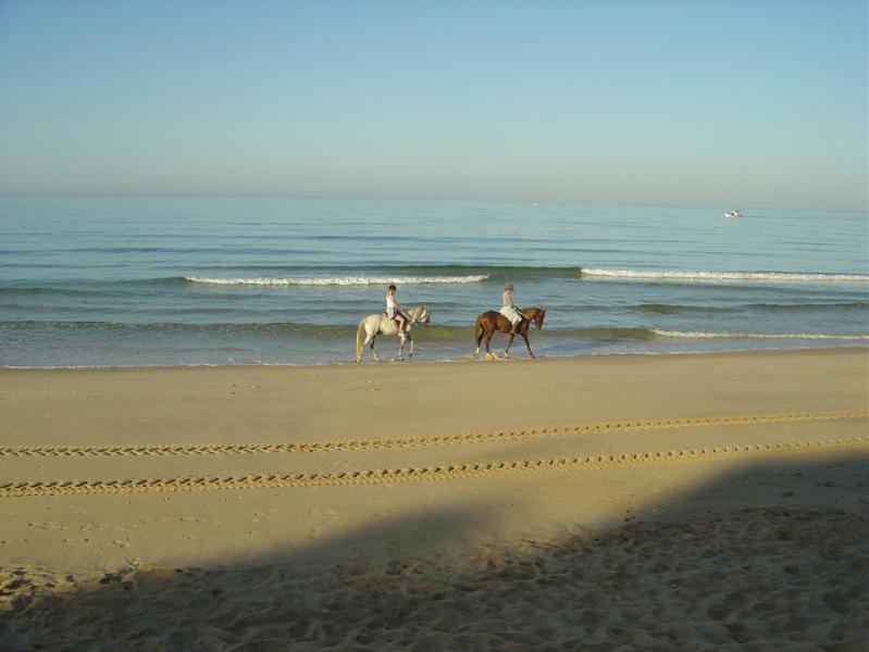 A caballo del caballo temprano en la mañana