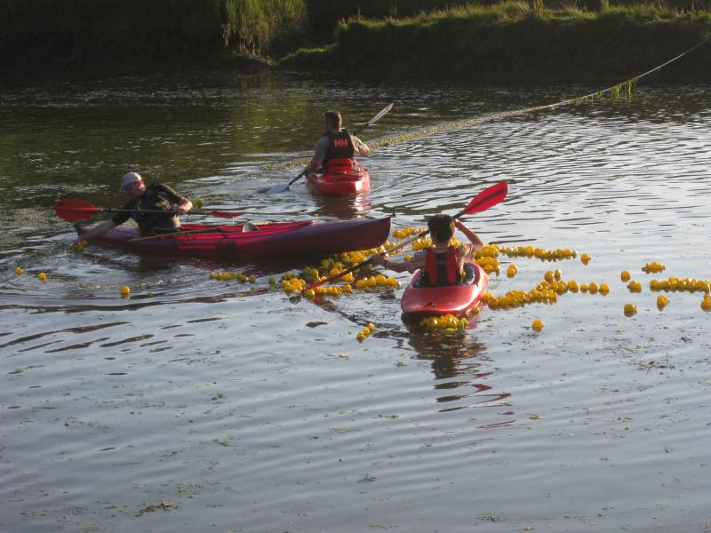 Duck race at Cresswell Quay