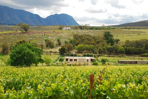 Earth Cottage, viewed from the neigbouring farm, Hamilton Russell Vineyards.