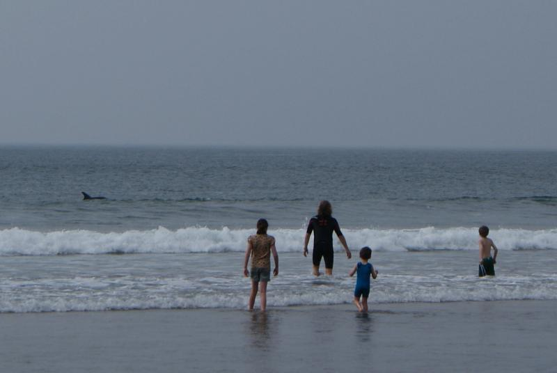 In the sea with a couple of dolphins just a few metres away, Fanore beach