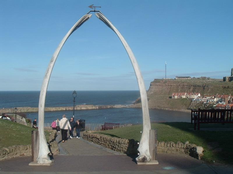 The Whalebones