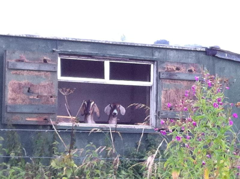 Nosy Neighbours! Spot them on your walk down the lane at South Littleton