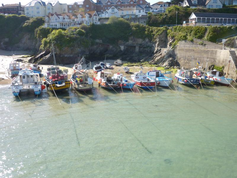 Newquay Harbour.   Book a boat journey to catch mackerel.  You may even see Dolphins and sea lions.