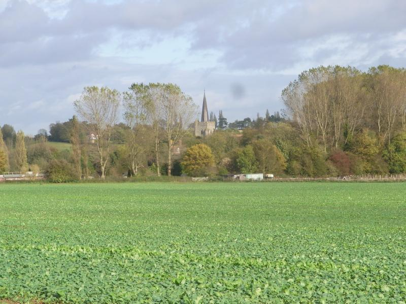 Distance view to Wingham Church