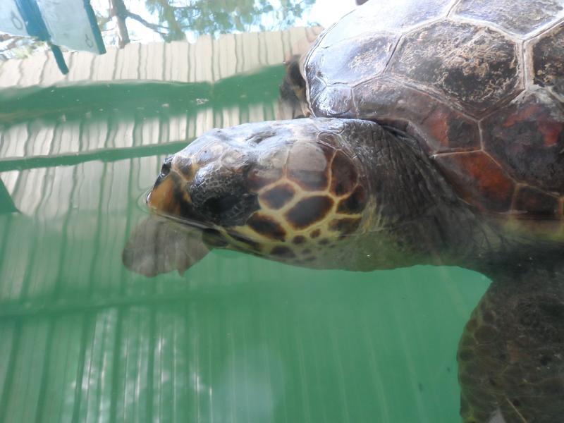 Turtle Rescue Centre - Iztuzu beach