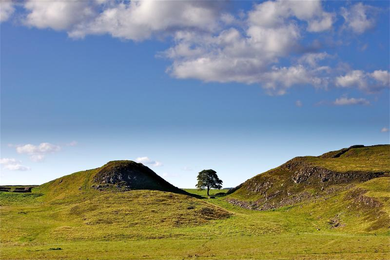 Summer View Sycamore Gap near Brownside Cottage, Hadrian's Wall, Bardon Mill, Hexham, Northumbe