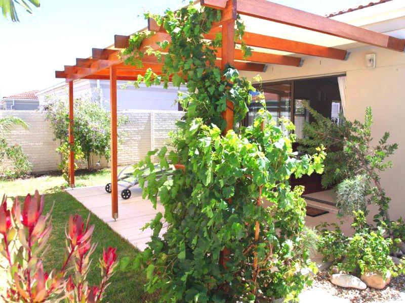 Patio with vine