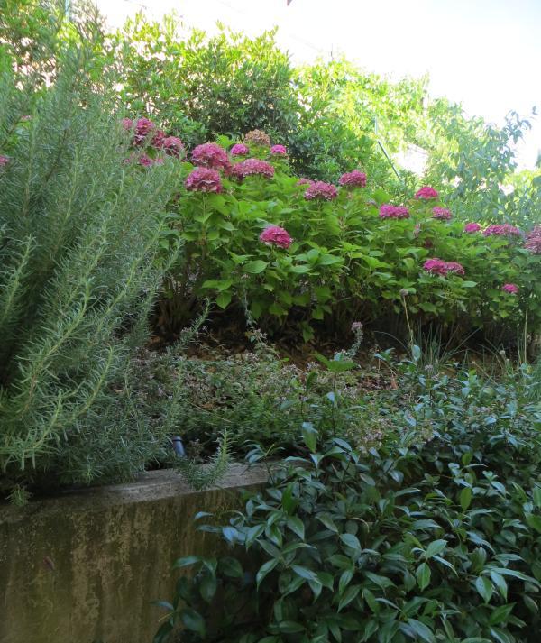 Kräutergarten (Oregano, Rosmarin und Schnittlauch) zurück