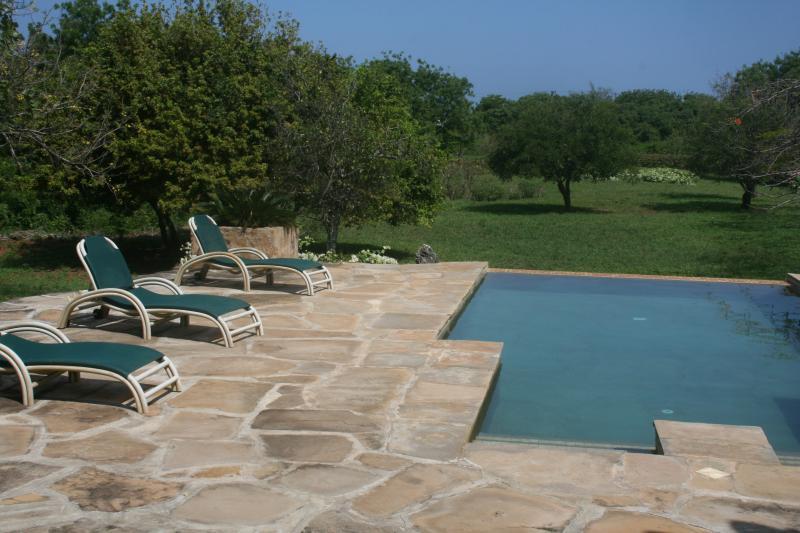 Vista desde la piscina en el jardín
