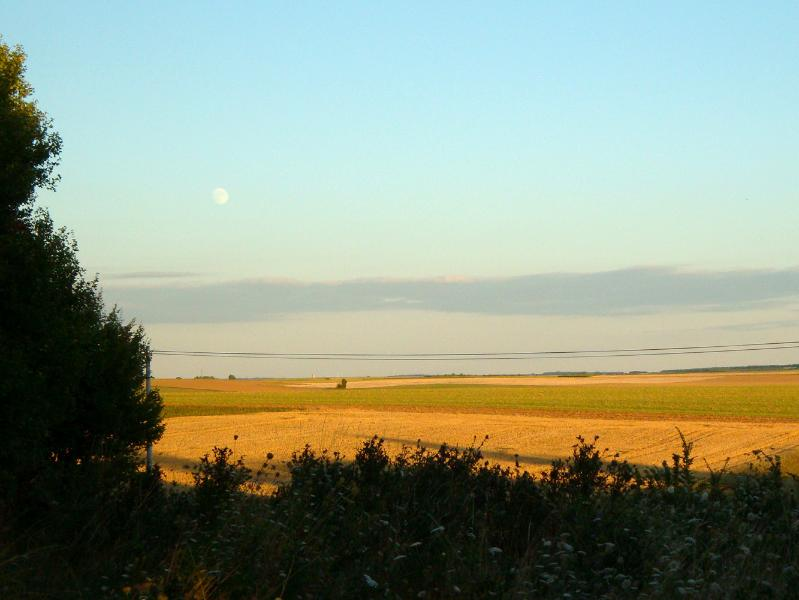 our view in the evening across the sunflower fields - even better with a glass of wine!
