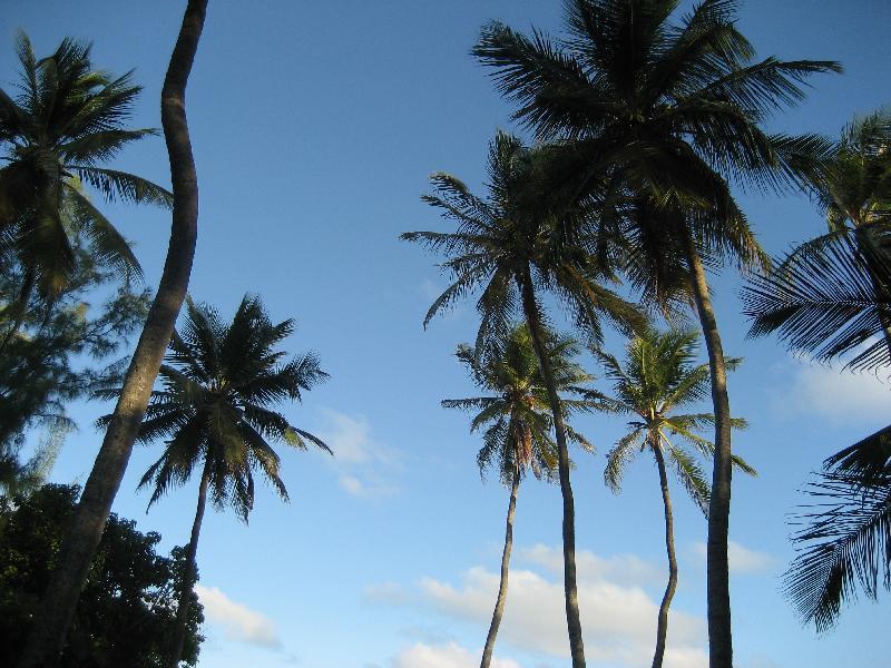 Palm trees at local beach