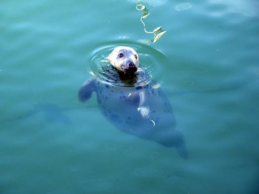 Sidney the Seal x