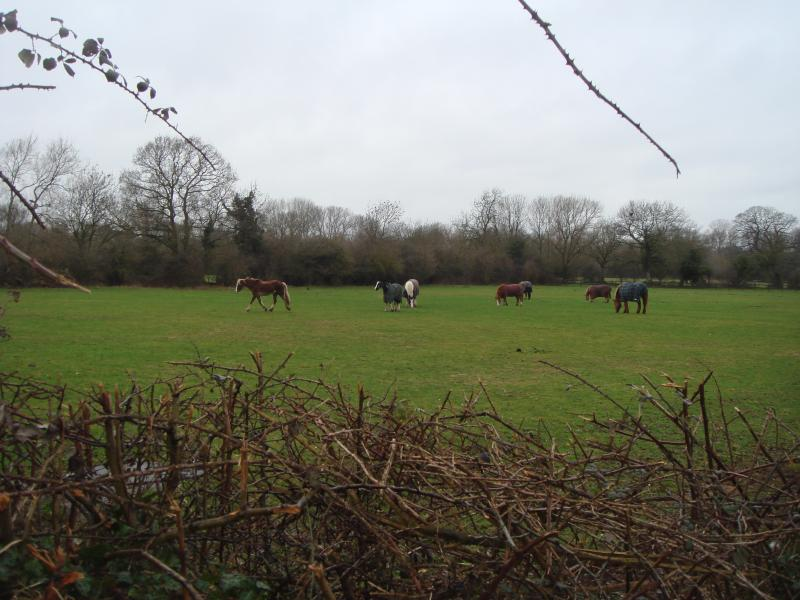 Horses grazing 200m from the house