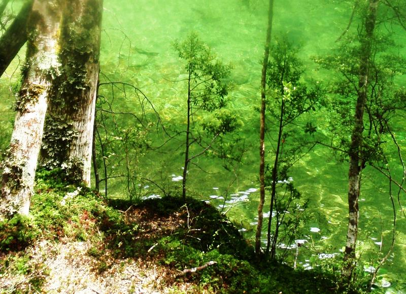Tributaries of the Oreti River can have emerald green clear water and very large, wary brown trout.