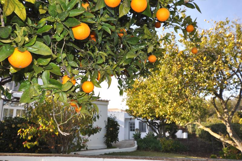Orchard apartment only a few metres from the pool. Approach from citrus tree lined garden path.