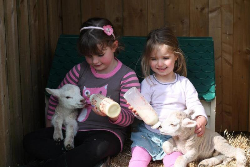 The children love to feed the lambs by the bottle.