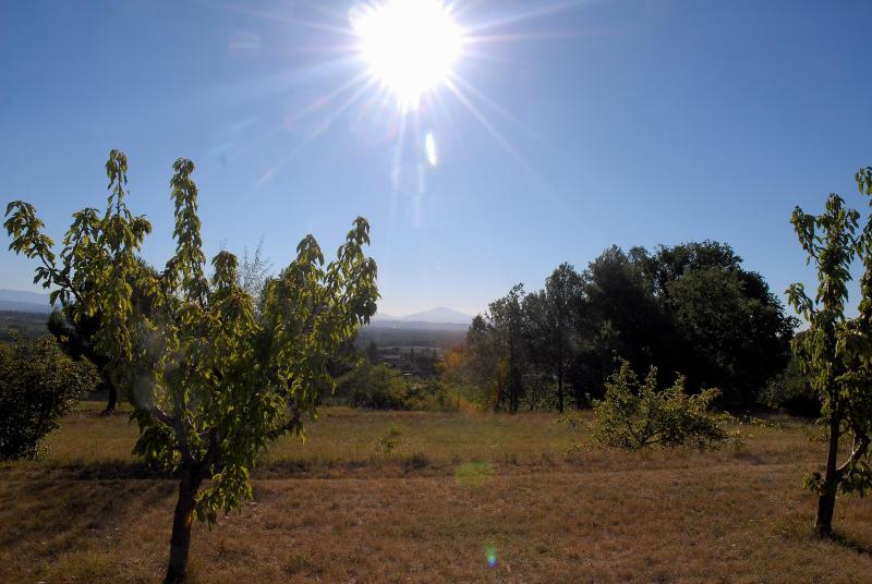 From cherry tree field, a view to Ventoux Mount
