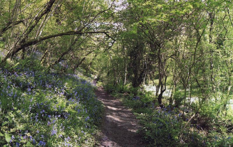 Village Walks - Biddlecombe Wood in Spring.