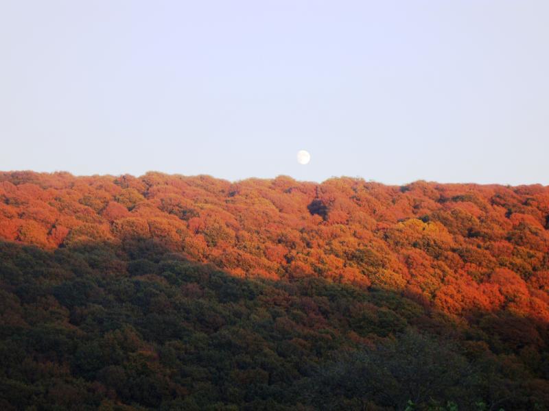 Autumn glory at Porth-y-Parc