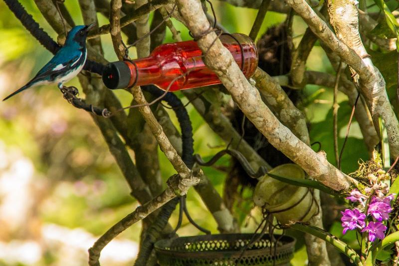 Ahhh...Ras Natango Gallery & Garden. A bird lover's paradise. We can take you there.