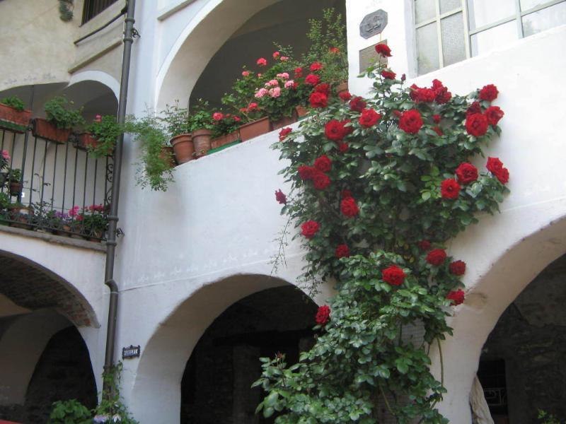 facciata con rosa 'rampichina'