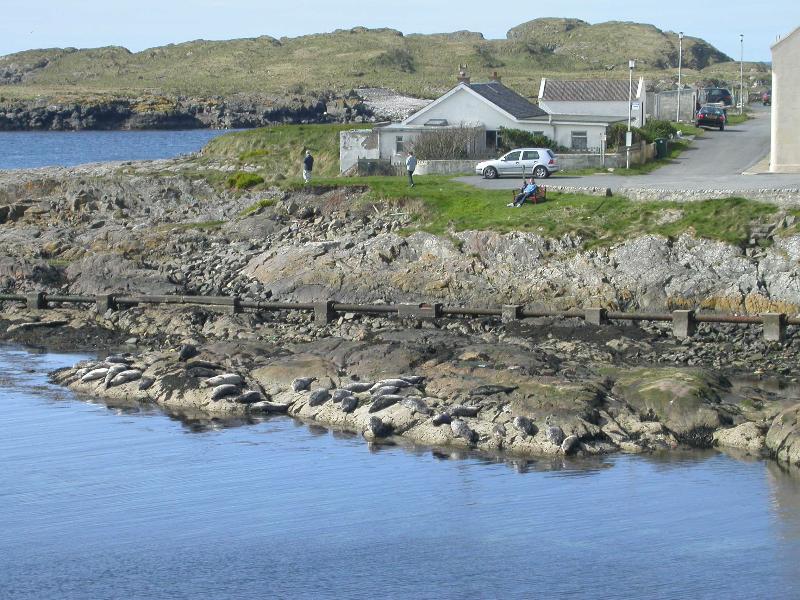 Seals in Bay