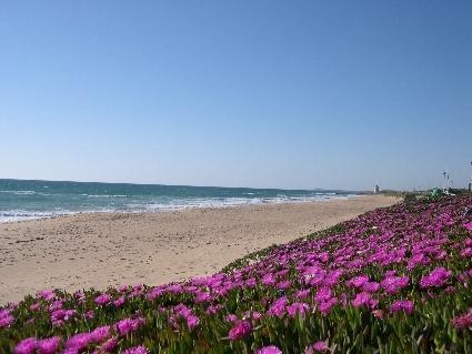 Playa del Palmar. Vejer de la Frontera. Cadiz.
