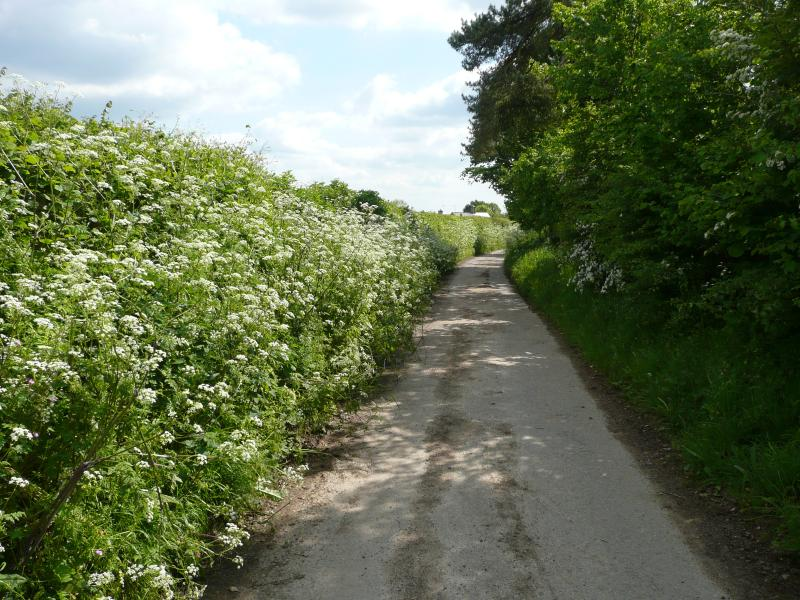 A truly rural setting - the lane