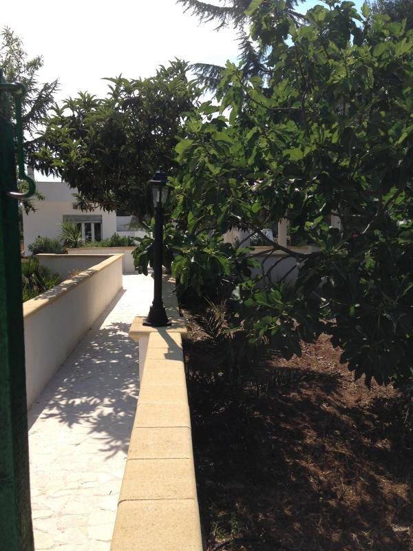 Path from the pool to the trullo