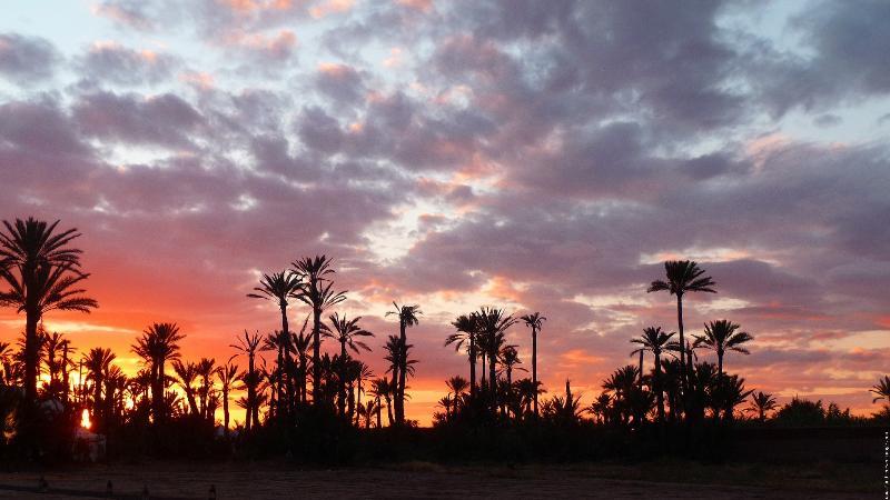 Couché de soleil sur la Palmeraie