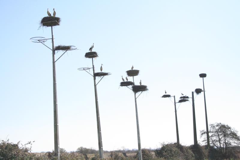 Reserva Natural de Cigüeñas