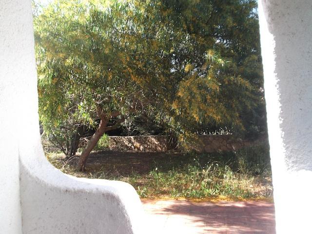Back Garden - Giardino dietro casa
