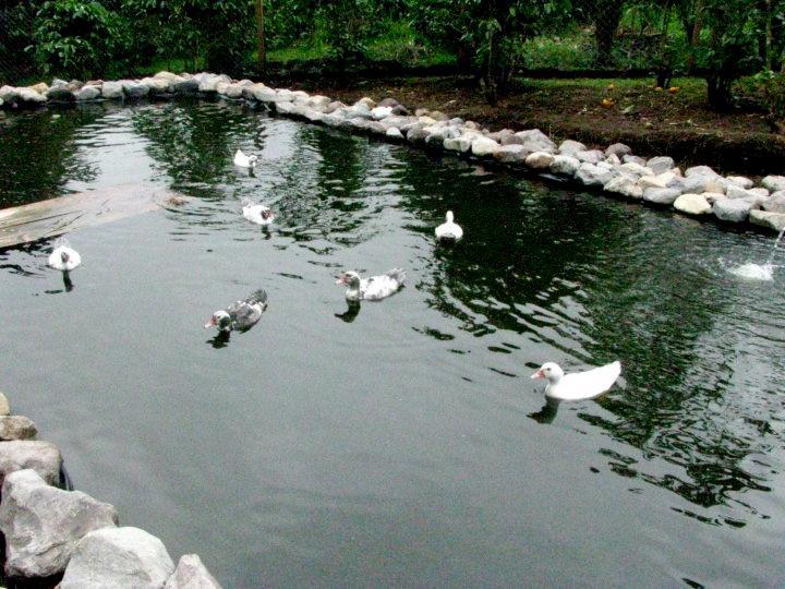 Estanque de los patos