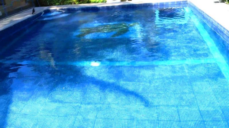 Close Up foto de piscina limpia al lado de casa
