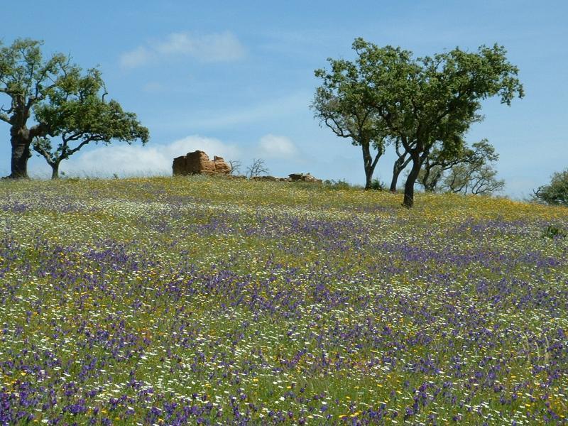 Vale da Cegonha grounds in Springtime