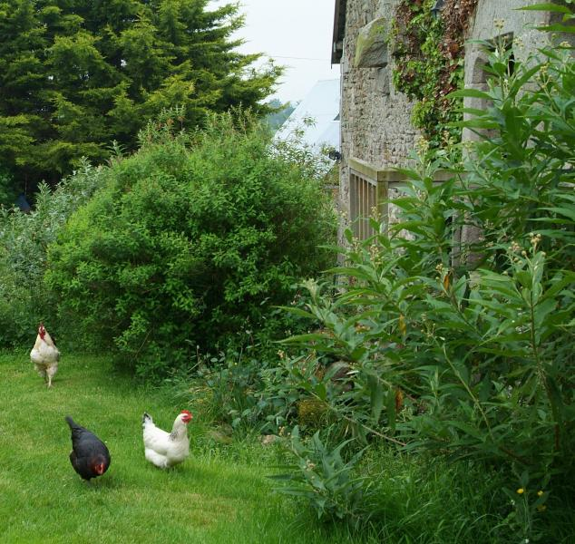 ....and being visited by our friendly chickens