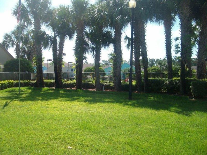 mooie palmbomen rondom het zwembad